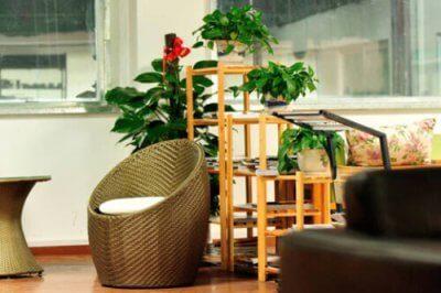 inquinamento indoor piante casa